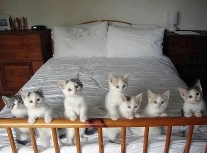 К чему снится много котят женщине
